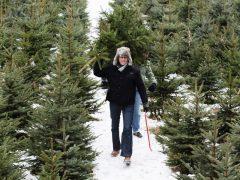Новогодние елки можно приобрести в лесничестве