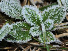 Экстренное предупреждение: ночью 3 и 4 июня ожидаются заморозки