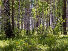 В лесу найден пропавший в июле мужчина