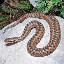 Кроме клещей активизировались и змеи