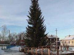 Новогодние ели в г.Талица и п.Троицкий