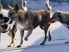 Про собак и не только…