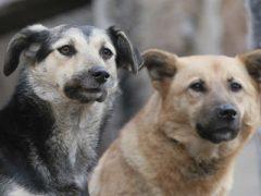 Внимание — отлов собак!