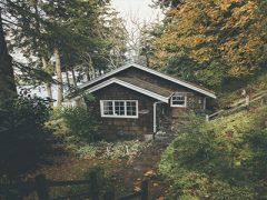 Жить рядом с лесом станет накладнее