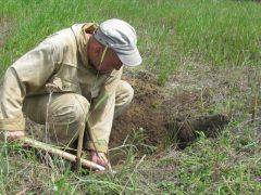 Археологи в Мохирево. Что они ищут?
