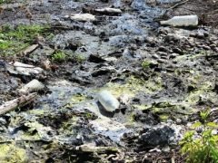 Грозит ли Пионеру экологическая катастрофа?