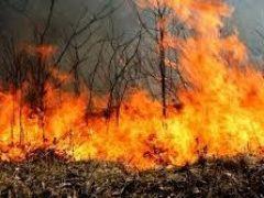 В Талицком ГО действует особый противопожарный режим