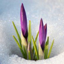 Вспомни лучшую весну