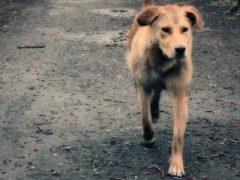 Вот бежит бездомный пес…