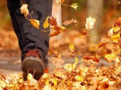 Осеннее происшествие
