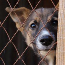 Очередной отлов собак пройдет 22 апреля