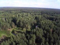 Будем продавать лес Китаю?!